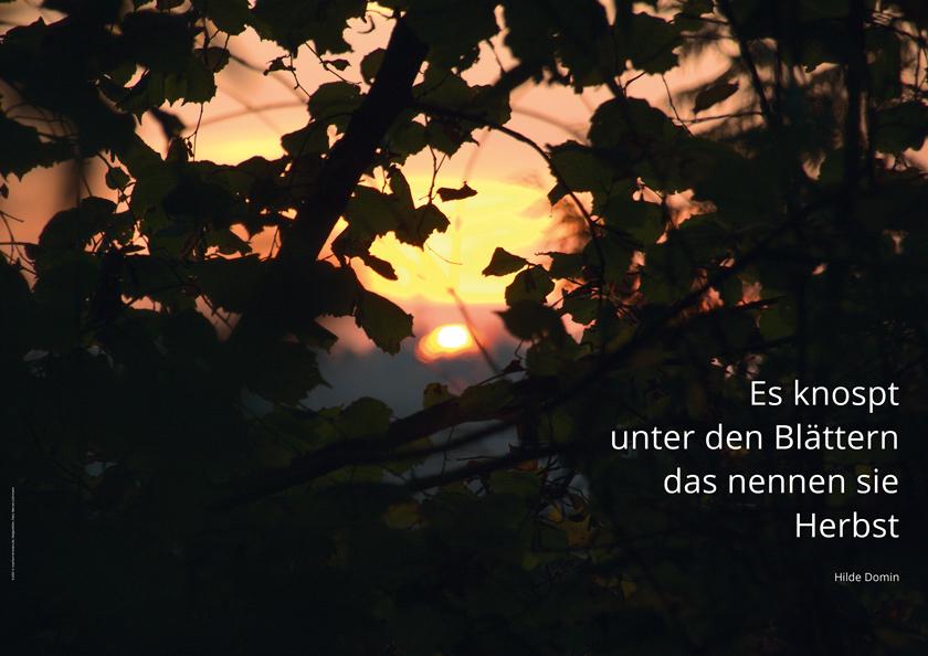 Christus König, Osnabrück: Plakat ›Herbst‹